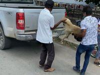Cadela foi esfaqueada e morta no Sertão