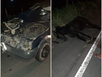 Cavalo provoca acidente em rodovia de Major Izidoro, Sertão de Alagoas.