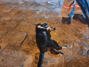 Gato que provocou interrupção de energia morreu eletrocutado